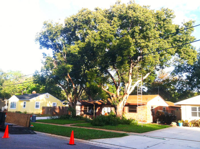 Lawn maintenance florida tree trimming for Landscaping rocks pinellas county